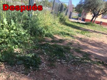 Limpieza de patios (29 mar 2019 16-34) (2)